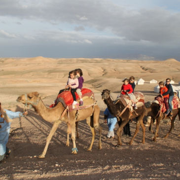marrakech half day desert camel riding